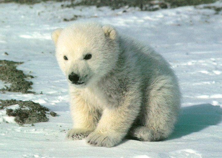 would you want this cute little polar bear to die swimming in water pollution?