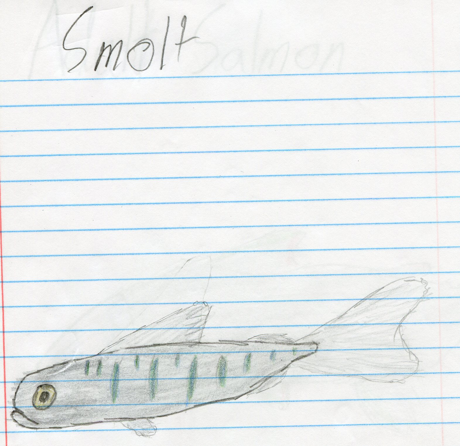 The Smolt Stage