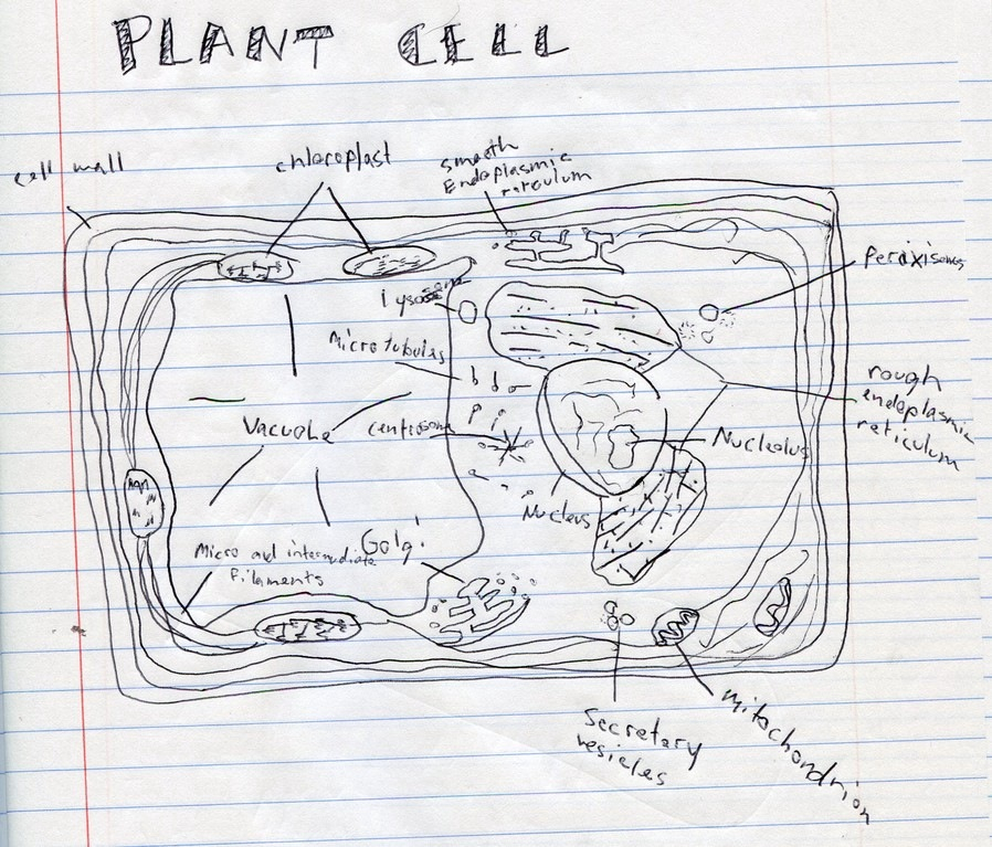 Cell diagram worksheet 5th grade